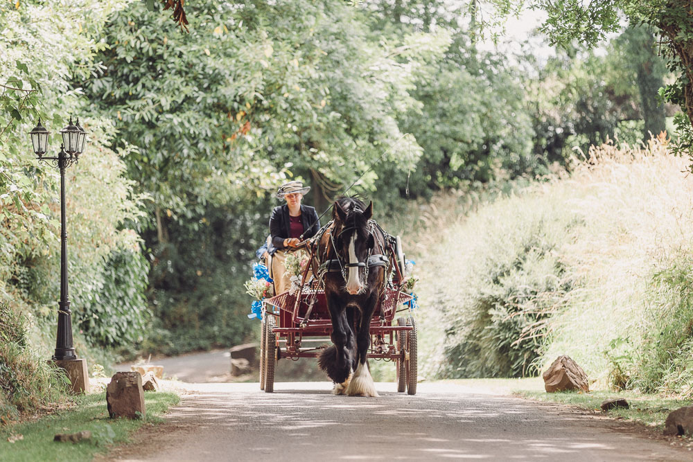 Bride arrives in horse and carriage