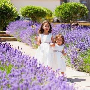 Flowers girls walk down the lavendar lined aisle at Upton Barn & Walled Garden