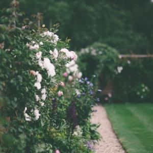 The Walled Garden in full bloom at Upton Barn, Devon