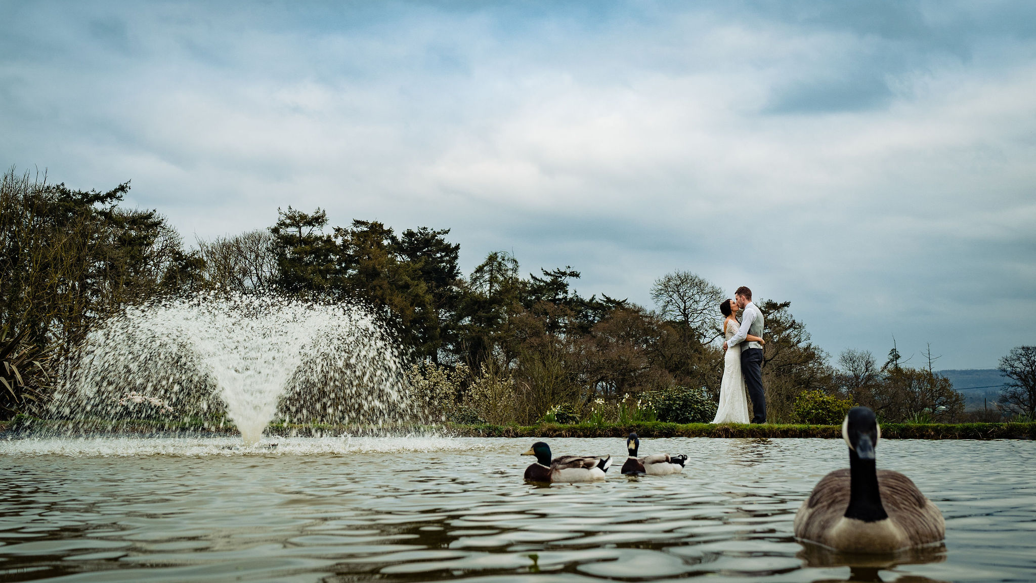 Bride and Groom enbrace beside the lake and fountain at Upton Barn & Walled Garden with a Canada Goose and ducks in the foreground